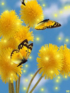 Yellow Dandelions and Butterflies flowers butterfly animated dandelion yellow gif Butterfly Gif, Butterfly Kisses, Butterfly Quotes, Beautiful Butterflies, Beautiful Flowers, Beautiful Pictures, Beautiful Gif, Images Gif, Gif Pictures