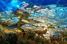 I campi di riso terrazzati della contea dello Yuanyang, nella provincia cinese dello Yunnan,      LA NATURA SI FA BELLA per---------------