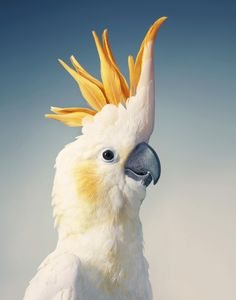 Endangered - Tim Flach Tropical Birds, Exotic Birds, Colorful Birds, Bird Drawings, Animal Drawings, Beautiful Birds, Animals Beautiful, Animals And Pets, Cute Animals