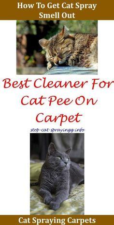 Weird Guys Everywhere 45 Photos Catsprayingapplecider