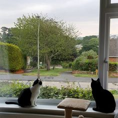 Portia and Beatrix checking out the new neighbourhood.