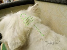 Below is a description and pictures of the way that I groom my  customers Westies.     'Pet' grooming a Westie means that I will groom the ...