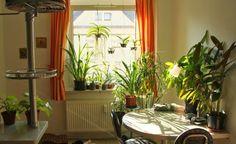 10 Soluciones prácticas para darle vida al hogar - Vida Lúcida
