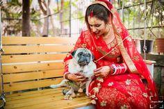 pets at wedding Dog Wedding, Wedding Shoot, Wedding Tips, Bridal Makeup Images, Indian Bridal Makeup, Indian Wedding Photography, Photography Uk, Mehndi Photo, Bridal Portraits