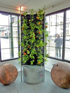Chris Bribach of Plants On Walls created an aquaponic vertical vegetable garden concept for a showroom in San Francisco.