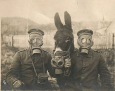 """WW1: Two German soldiers, wearing their gas masks, pose with their mule, which has been barely fitted with a personnel gas mask as well. The poor mule of course stood no chance of surviving a gas attack with such """"protection."""" 1916."""