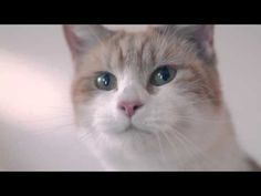 Wickes #ProjectPossible: Timber, a chic catwalk - YouTube