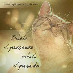 #presente #pasado #frases