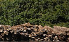 How Rainforest Destruction Hides in Our Clothes