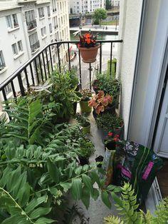 Nouvelle grande séance de jardinage sur mon balcon http://www.pariscotejardin.fr/2016/05/nouvelle-grande-seance-de-jardinage-sur-mon-balcon/