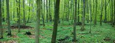 Fototapete schön grün (Nr. 7224)  www.berlintapete.de