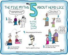 Myths of head lice.