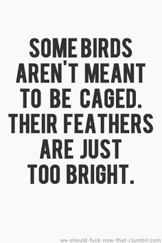 """""""Some birds aren't meant to be caged. Their feathers are just too bright."""" Shawshank Redemption (1994)"""