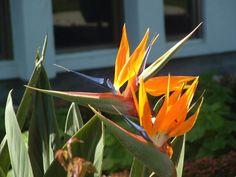 Tonga photo K. Tonga, Tropical Paradise, Plants, Plant, Planets