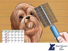 https://flic.kr/p/Qr6eu7   Perros de pelo largo. CLÍNICA VETERINARIA DEL BOSQUE 3   Perros de pelo largo. CLÍNICA VETERINARIA DEL BOSQUE. Los perros de pelo largo necesitan de cuidados especiales, como cepillarlos por lo menos una vez al día. Si al hacerlo observas que tiran más pelo de lo normal, te recomendamos traerlo a la Clínica para revisarlo y verificar si se trata de algún otro problema. En Clínica Veterinaria del Bosque contamos con servicio de estética para que tu mascota; te…