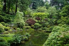 This is a view of the Upper Pond - what fabulous contrast of shapes and colors. Takuma Tono, a Tokyo Agricultural University professor and internationally recognized authority on Japanese landscape design, was commissioned to design and supervise the development of the garden.