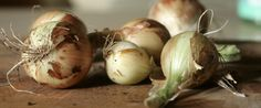Vegetables You Can Grow From Food Scraps