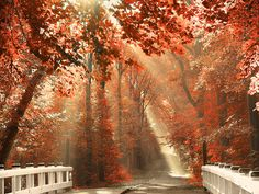 Red for Rest – Amsterdam Forest, The Netherlands By Lars Van De Goor #beautiful #amazing #photography