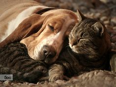 cat pillow-dog blanket by Szilvia Pap-Kutasi on 500px