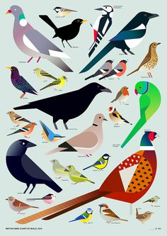 Amazing British Bird Chart by my talented friend Joseph Luxton @Build