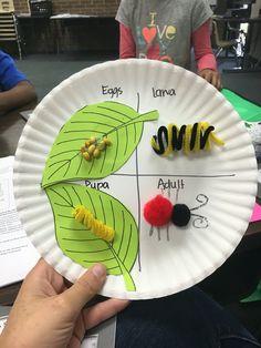 Ladybug life cycle grade science дошкольный, жизненные ц Ladybug Crafts, Butterfly Crafts, Preschool Science, Science Experiments Kids, Bug Activities, Sequencing Activities, Life Cycle Craft, Butterfly Life Cycle, Chenille
