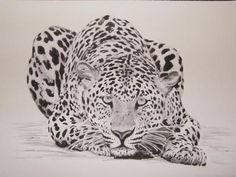 Image detail for -Charcoal Drawings of African Animals - Johannesburg - Art ...