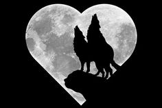 Framed Print - Wolves Howling At A Shaped Moon (Gothic Wolf Picture Art) Wolf Wallpaper, Animal Wallpaper, Anime Wolf, Wolf Howling At Moon, Wolf Silhouette, Canvas Silhouette, Wolf Artwork, Wolf Painting, Fantasy Wolf