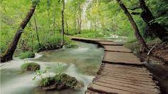 Resultado de imagen de vinilos paisajes bosques con caminos
