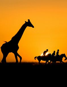 """""""Sunset ride"""" Cannot say enough about an African Safari.A must do for any adventurous soul! can you say bucket list. I've been on an amazing Safari in Kenya so I could mark it off my list, now it's on my """"do again bucket list"""", lol!"""