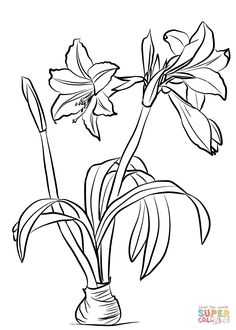 Amaryllis Brasiliensis coloring page from Amaryllis category. Select from 31983 printable crafts of cartoons, nature, animals, Bible and many more. Watercolor Flowers, Watercolor Art, Amaryllis, Zentangle, Flower Sketches, Printable Crafts, Flower Template, Free Printable Coloring Pages, Painting & Drawing