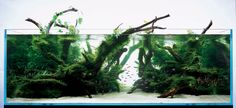 Self-sufficient tank - Page 2 - DIY Aquarium Projects - Aquatic Plant Central