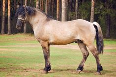 Vyatka horse. A small draft horse from Russia with Estonian horse ancestry. Like so many draft breeds, it is on the UN agricultural division's endangered list.