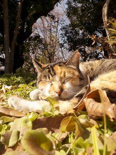 sunshine,soft bed