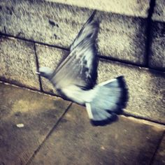 Caught a pigeon during take off.   #pigeon #bird #fly #flight #takeoff #sky #birds