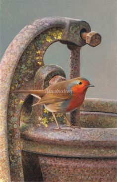 Illustration of Robin bird © Andrew Hutchinson