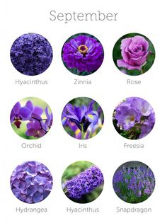 wedding flowers in season - September Look mum! All purple in season!