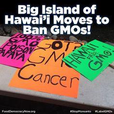 Big Island Of Hawaii Moves To Ban GMOs! More Here: http://politicalblindspot.com/big-island-of-hawaii-bans-gmos