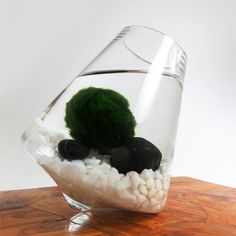 Marimo in the Rocking Playground (sold out) | Gardens of Wendiland