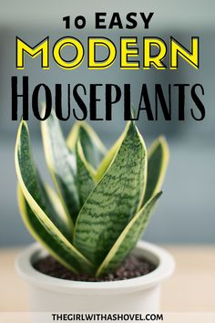 Don't mess up your design scheme with the wrong indoor plant! Use one of these houseplants to bring a modern element into your living space! Modern Indoor Plants | Houseplants for Modern Interior Design | Modern Home Design | Modern Living Room Design | Indoor Plants for Modern Living Room |