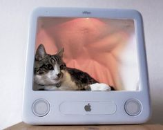 10 DIY Cat Bed Ideas » Modern Home Interior Design