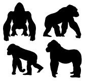 Find Abstract Vector Illustration Gorilla Silhouetthe stock images in HD and millions of other royalty-free stock photos, illustrations and vectors in the Shutterstock collection. King Kong, Gorillaz, One And Only Ivan, Animal Outline, Tropical Art, Royalty Free Images, Vector Art, Quilt Patterns, Clip Art