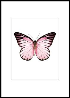Print with a pink butterfly, stylish for a collage.