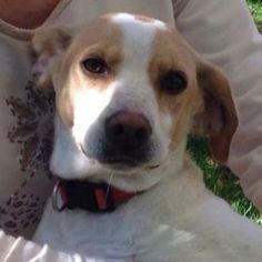 Fresa , perro en adopción