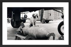 Puppy 1 Licensed Smithsonian Framed Graphic Art