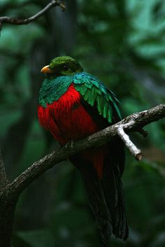 I am amazed by the colors of this bird