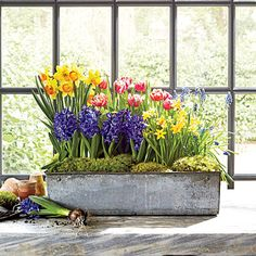 Bring Spring Indoors | Here, we've paired an assortment of popular bulbs with an industrial-style galvanized-metal container you might find at a flea market, antiques store, or online. Search local garden centers for inexpensive forced bulbs.