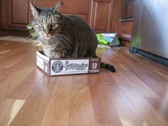From my series, Benny In A Box. Miss you, buddy!