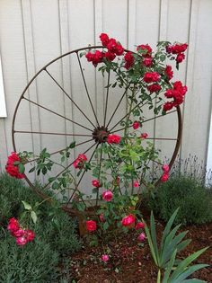 Wagon Wheel as Trellis | Dreaming Gardens