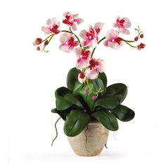 """Triple Mini Phalenopsis Silk Orchid Arrangement - Three times the splendor - that's our 20"""" Triple Mini Phalaenopsis Silk Orchid Plant! It's perfect for smaller shelves or areas where our taller silk arrangements won't fit, yet it offers all of the same features such as three stems of full-blooming silk flowers and buds, bamboo stakes to support the stems, and plenty of lush foliage and aerial roots. It comes expertly arranged in a lovely ceramic pot, ready for display. Number of Trunks: NA…"""