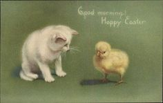 Easter Cat Kitten & Chick Greeting c1910 Old Postcard